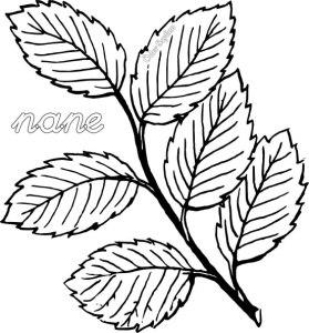 nane-kelimesi-boyama-03