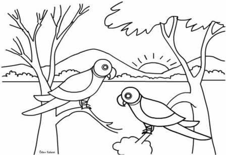 Boyama çalişmasi Papağan 1 Sinif Görsel Sanatlar Dersi ödev Sayfam